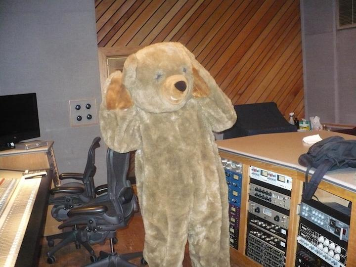 Confused Studio Bear